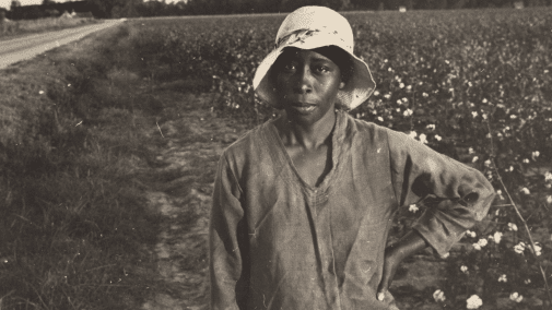 African American Woman standing in a cotton field during slavery times